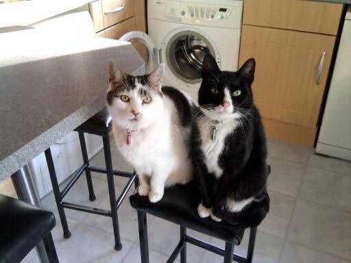 Lucy & Levi on a stool.jpg