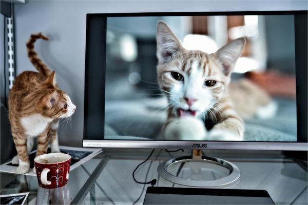 Cat looking at computer screen with image of cat