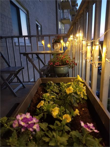 A night view of some flowers on a balcony with lights illuminating the space giving it a magical glow.