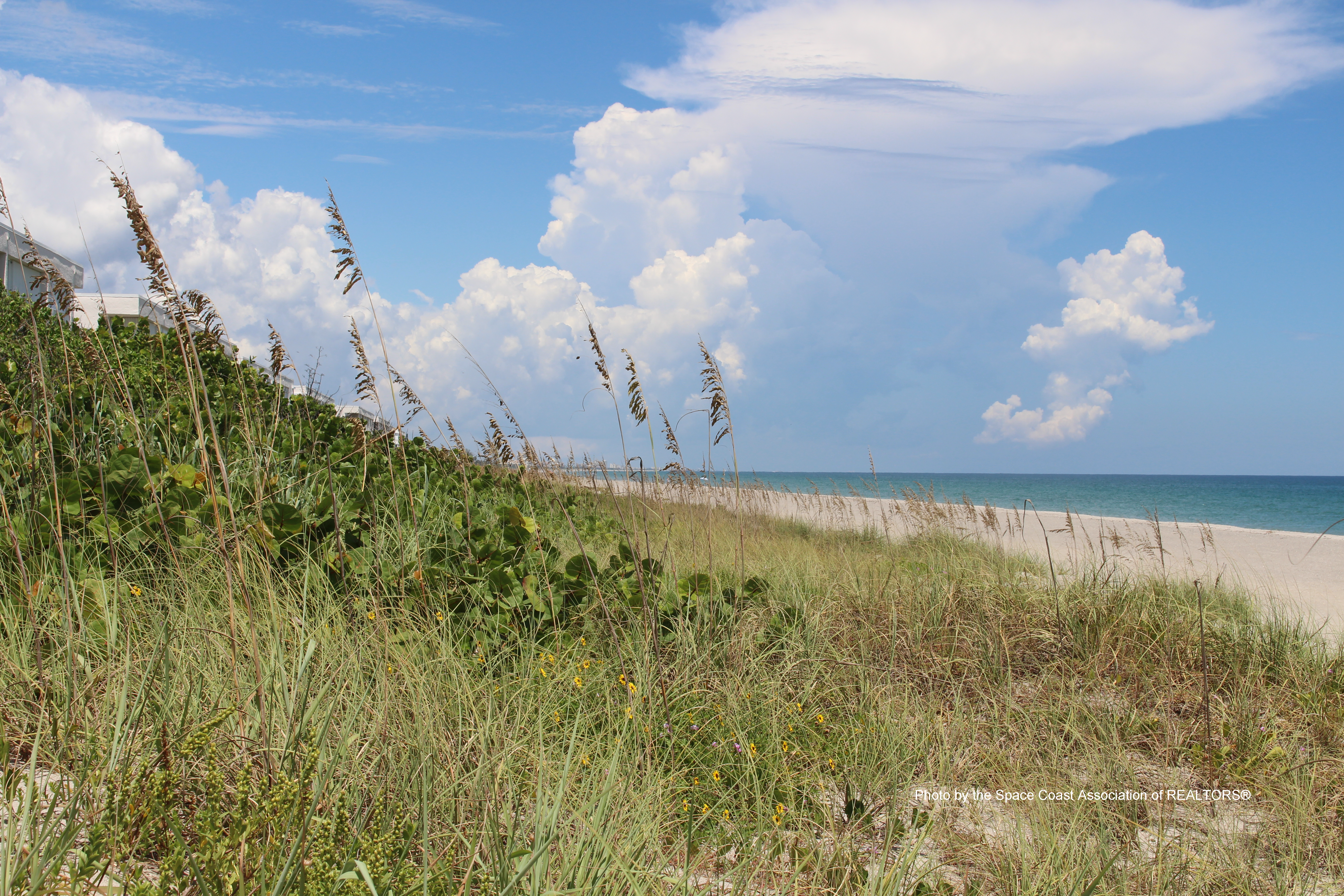 Melbourne Beach, Florida sand dunes with overgrowth of grasses