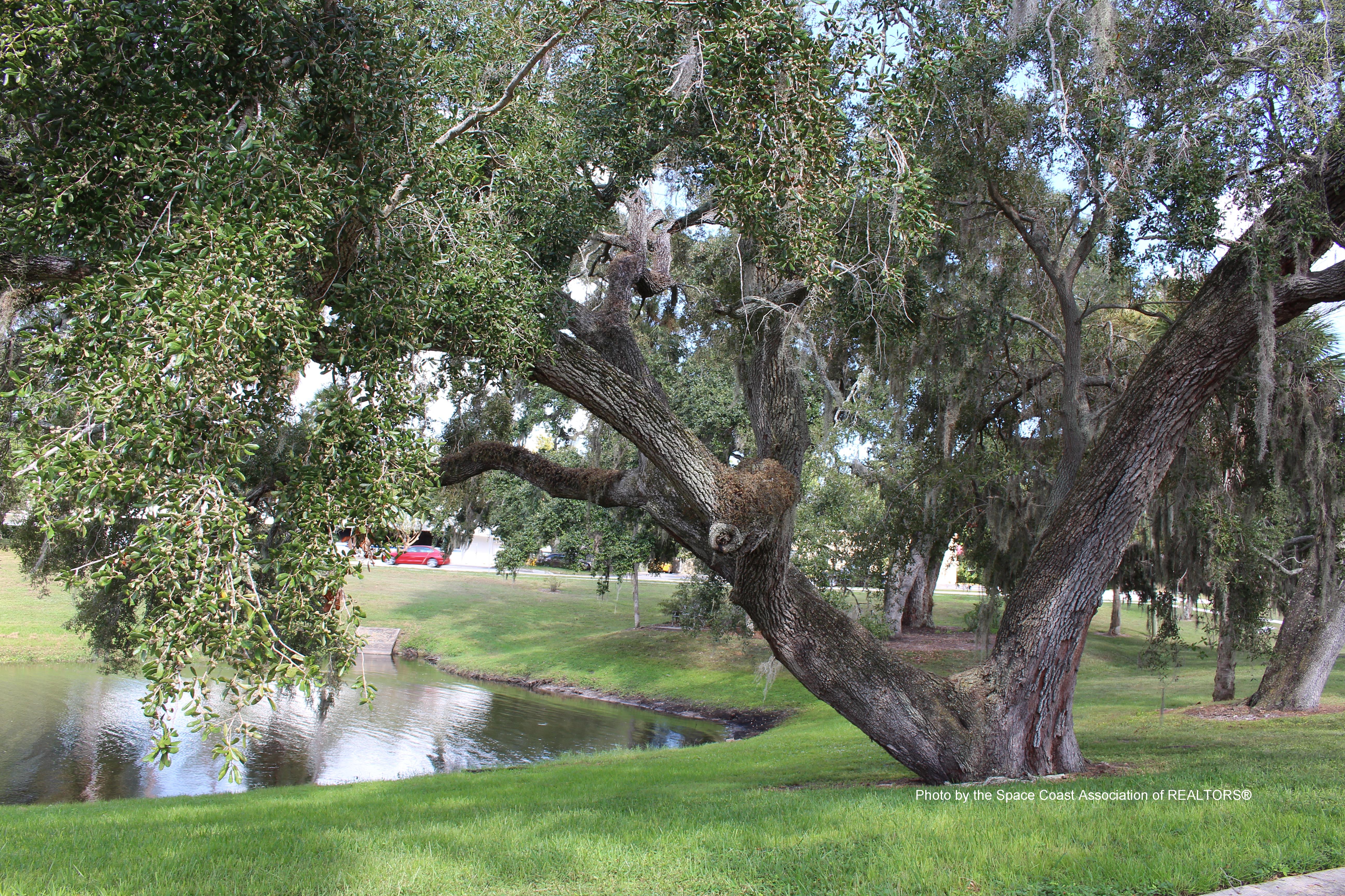 Lake Gilliard at Morris Park, Rockledge, Florida