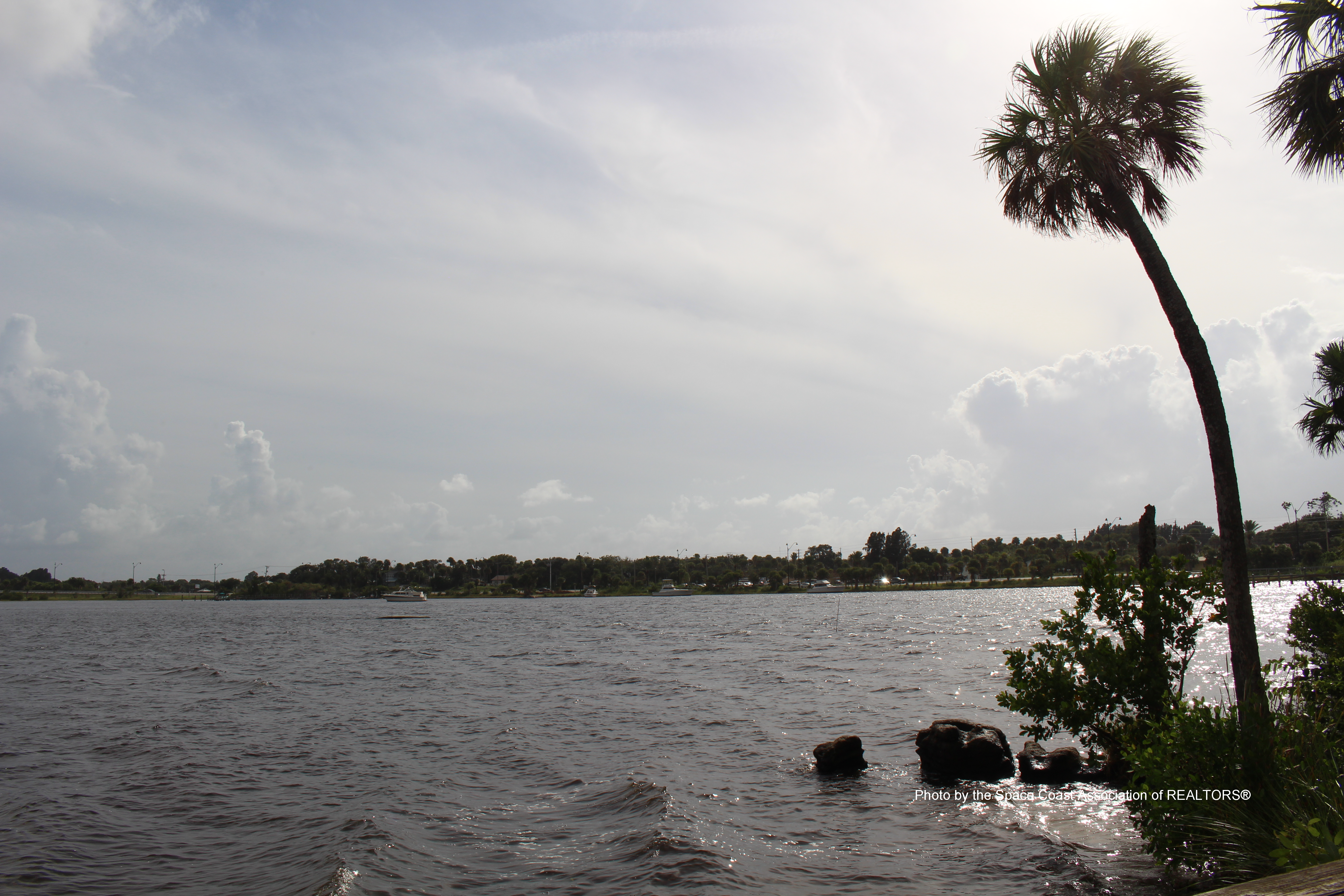 view of water from shore with palm tree on right side in Palm Bay, Florida